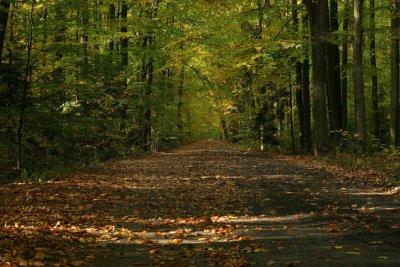 Jesienne fotografie lasów - jak zrobić to dobrze?